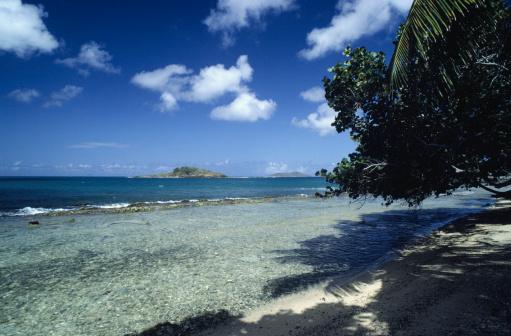 Frond「Beach shoreline, St. Croix, US Virgin Islands」:スマホ壁紙(10)