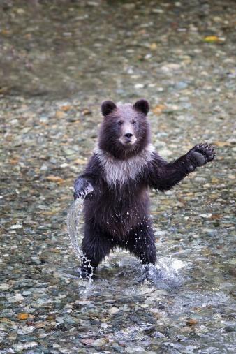 Animal Arm「Hyder, Alaska, United States Of America」:スマホ壁紙(8)