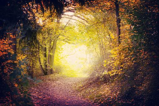 Fantasy「Magical Path In Autumn Park」:スマホ壁紙(1)