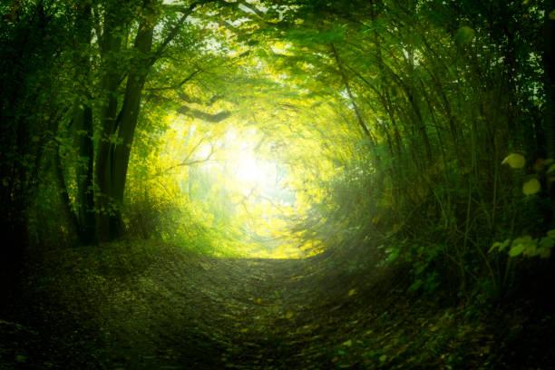 Magical path in summer:スマホ壁紙(壁紙.com)