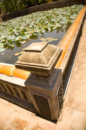 Lotus Water Lily「Lily pond」:スマホ壁紙(1)