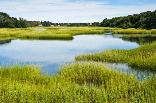 Marsh「Salt Marsh at Full Tide」:スマホ壁紙(2)