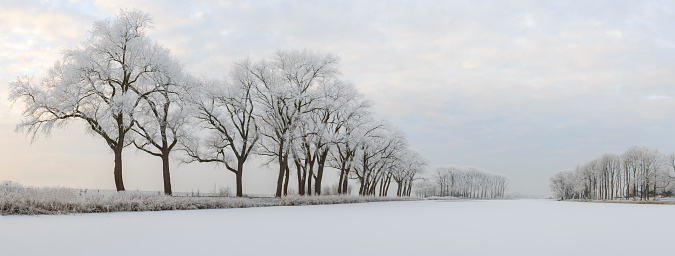 Netherlands「Frosty winter landscape with frozen trees during a beautiful day」:スマホ壁紙(4)