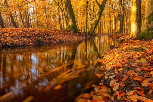 Netherlands「Flowing forest creek during a beautiful day in fall」:スマホ壁紙(0)