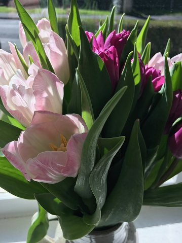 ブーケ「Vase of Tulips on a Sunny Window Cill」:スマホ壁紙(1)