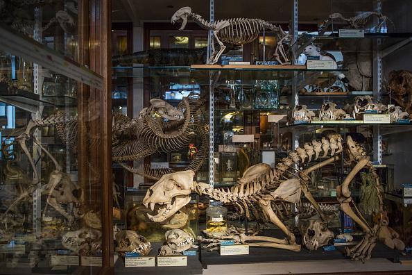 猫「The Grant Museum Undertake Conservation Work On Historic Taxidermy Collection」:写真・画像(5)[壁紙.com]