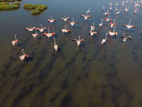 The Nature Conservancy「Wetland and Flamingos」:スマホ壁紙(12)