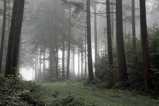 神秘「Footpath in dark and misty autumn forest」:スマホ壁紙(16)