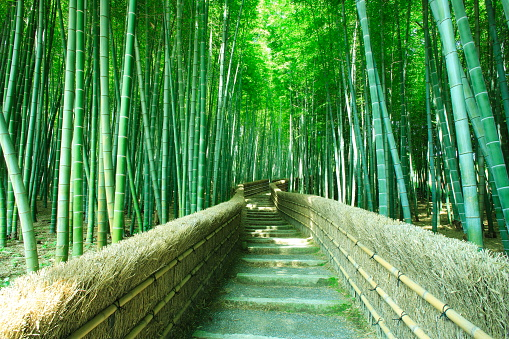 Hill「Footpath in Bamboo Grove」:スマホ壁紙(11)