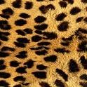 【ヒョウ柄】壁紙まとめ【豹柄】:まとめ