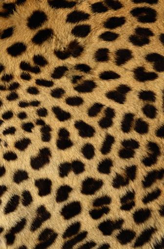 Leopard Print「Cheetah Fur」:スマホ壁紙(13)