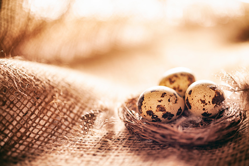 Easter Basket「Easter decoration with quail eggs in nest and feathers on jute fabric」:スマホ壁紙(9)
