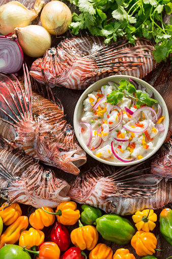 Specimen Holder「Lion fish ceviche」:スマホ壁紙(15)