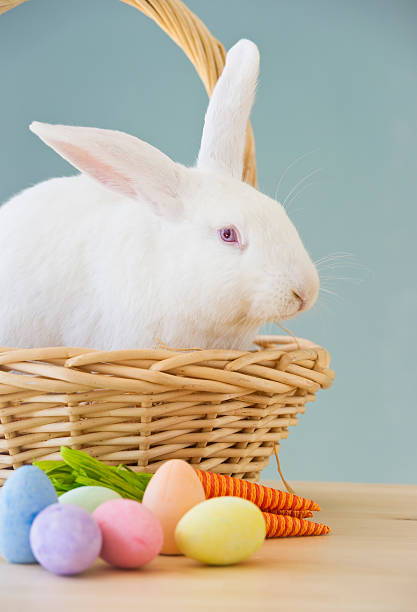 Rabbit in Easter basket:スマホ壁紙(壁紙.com)