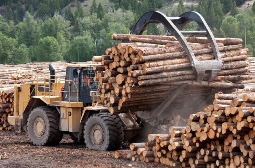 Hardwood Tree「Lumber Industry」:スマホ壁紙(18)