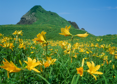 里山「Oonogame Rock and Day Lily, Sado, Niigata, Japan」:スマホ壁紙(15)