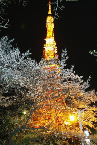 Tokyo Tower「Toyko Blossoms Early」:写真・画像(7)[壁紙.com]