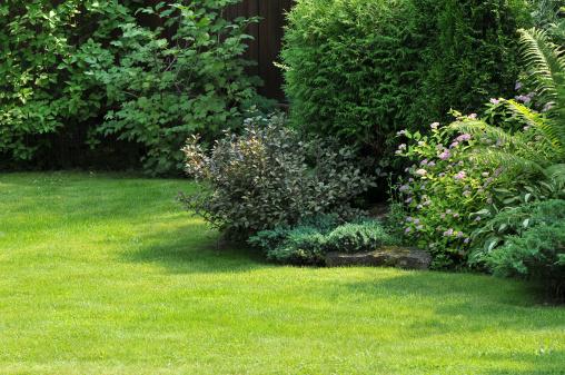 Coniferous Tree「Garden」:スマホ壁紙(19)