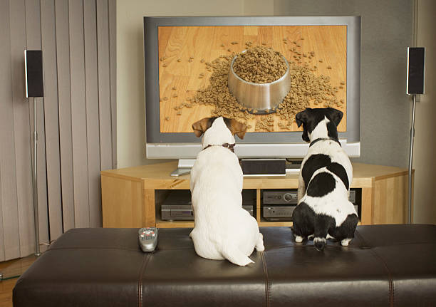 Dogs watching dog dish with food on TV:スマホ壁紙(壁紙.com)