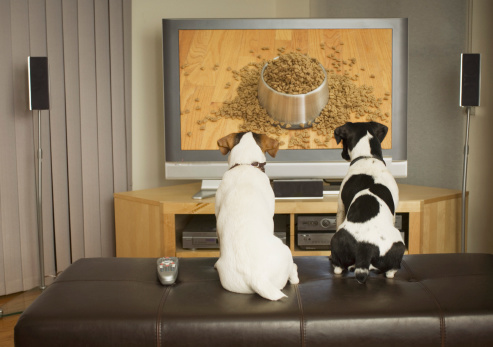 Watching TV「Dogs watching dog dish with food on TV」:スマホ壁紙(1)