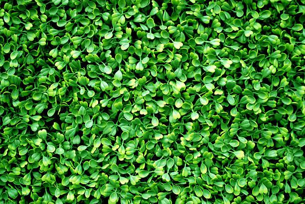 Fake hedge perfect texture:スマホ壁紙(壁紙.com)