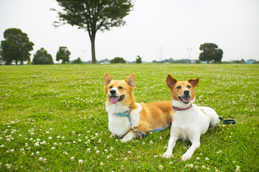 Two Animals「Two dogs lying side by side in a park」:スマホ壁紙(5)