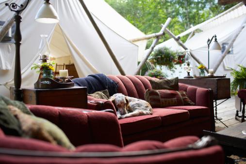 犬「犬には、屋外のソファーをご用意しています。」:スマホ壁紙(12)