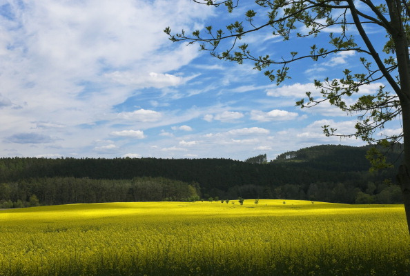 Responsibility「Krasna Hora, Czech Republic」:写真・画像(14)[壁紙.com]