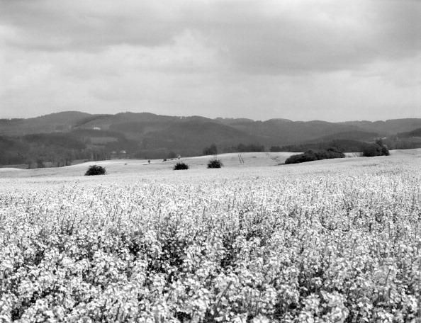 Oilseed Rape「European Agriculture」:写真・画像(17)[壁紙.com]