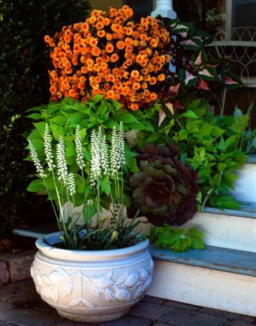 朝顔「Fragrant Nodding Ladies' Tresses in pot on porch 」:スマホ壁紙(12)