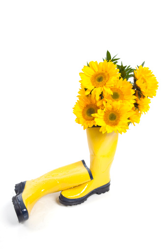 ひまわり「フルの Sunflowers Wellingtons」:スマホ壁紙(12)