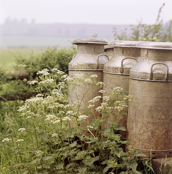 Parsley「Three Milk Churns And Cow Parsley」:写真・画像(6)[壁紙.com]