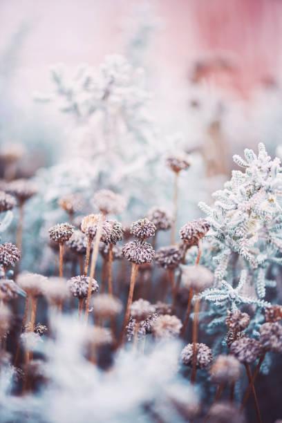 Wilted flowers in winter sunlight:スマホ壁紙(壁紙.com)