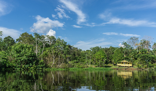Amazon Rainforest「Lodge in the Amazon rain forest and amazon river」:スマホ壁紙(5)