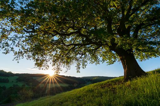オーク林「Oak tree with landscape at sunrise in spring, Odenwald, Hesse, Germany」:スマホ壁紙(3)