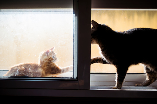 Kitten「Kitten and adult cat playfighting on window sill」:スマホ壁紙(14)