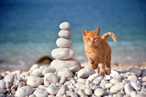 Kitten「スタックキトンとの石」:スマホ壁紙(16)
