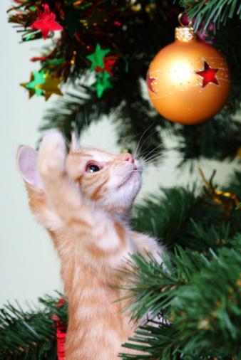 お正月「キトンとクリスマスツリー」:スマホ壁紙(19)