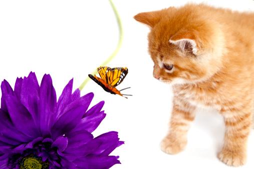 Mixed-Breed Cat「Kitten and Butterfly」:スマホ壁紙(18)