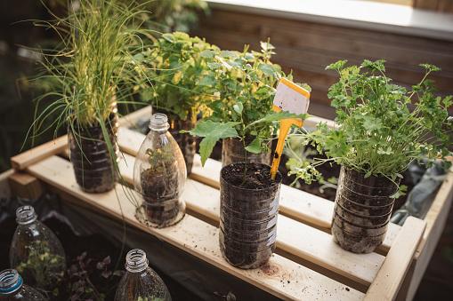 Specimen Holder「Recycled plastic bottles used in home garden」:スマホ壁紙(19)