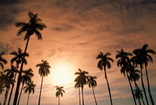 Frond「Royal palms at dawn, Vinales, Cuba」:スマホ壁紙(10)