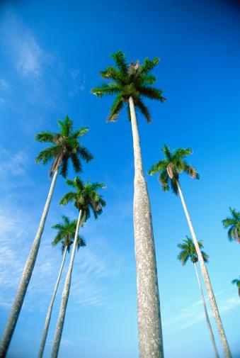 Frond「Royal palms, Vinales, Cuba」:スマホ壁紙(11)