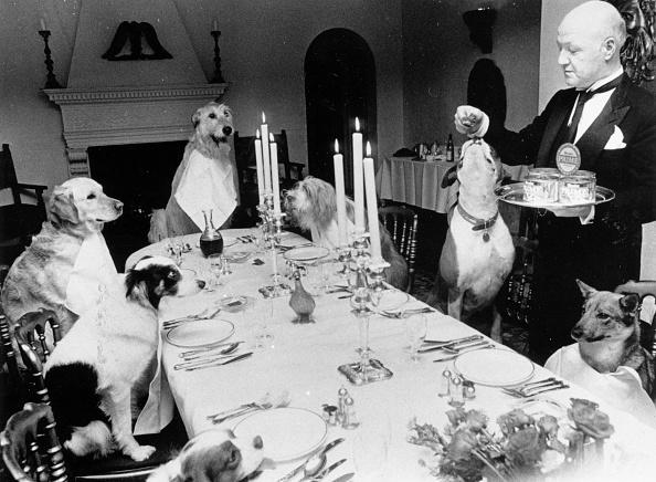 動物「Canine Banquet」:写真・画像(19)[壁紙.com]