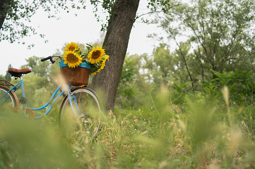 Flower Arrangement「Vintage bicycle outdoors」:スマホ壁紙(17)