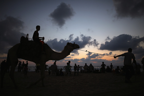 Vertebrate「Life In Gaza Almost A Year After The 2014 Conflict With Israel」:写真・画像(6)[壁紙.com]