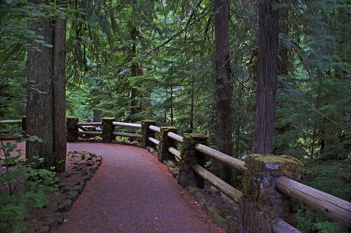 ウィラメット国有林「Williamette National Park Trails」:スマホ壁紙(16)