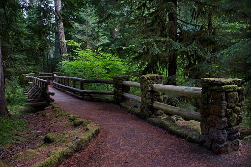 ウィラメット国有林「Williamette National Park Trails」:スマホ壁紙(15)