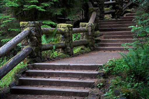 ウィラメット国有林「Williamette National Park Trails」:スマホ壁紙(1)