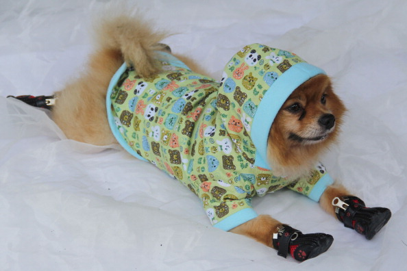服装「Family Business Tailors Ornate Clothes For Pets」:写真・画像(16)[壁紙.com]