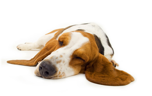 Exhaustion「Sleepy basset hound laying on a white surface」:スマホ壁紙(18)